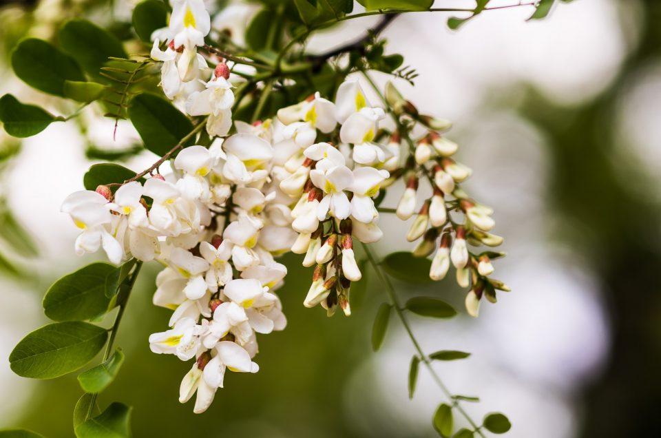 Springtime in Portugal