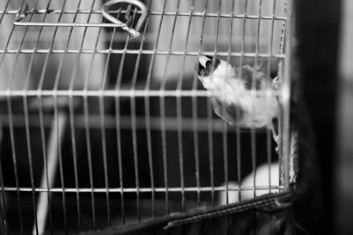 Singing bird in Zoorkhaneh, Tehran