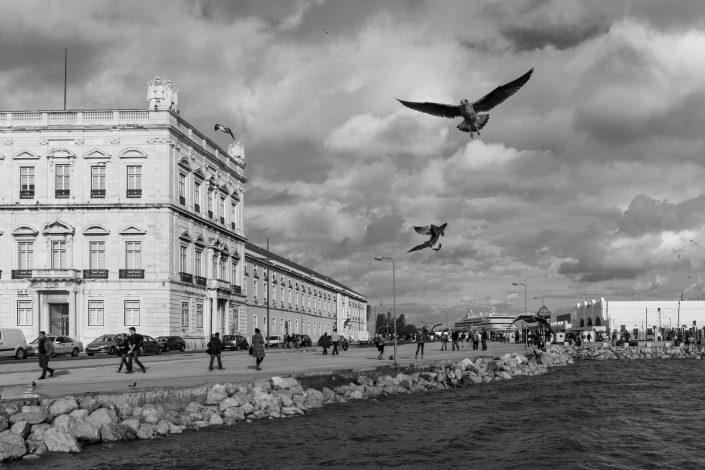Lisbon Seagulls flying over sea
