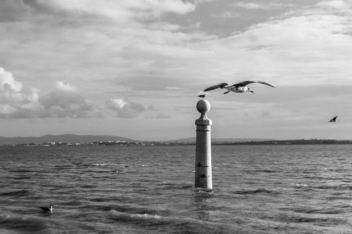 Lisbon peer with seagulls flying, Portugal