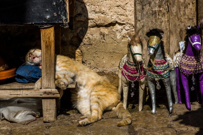 Cat sleeping under table Fez souk