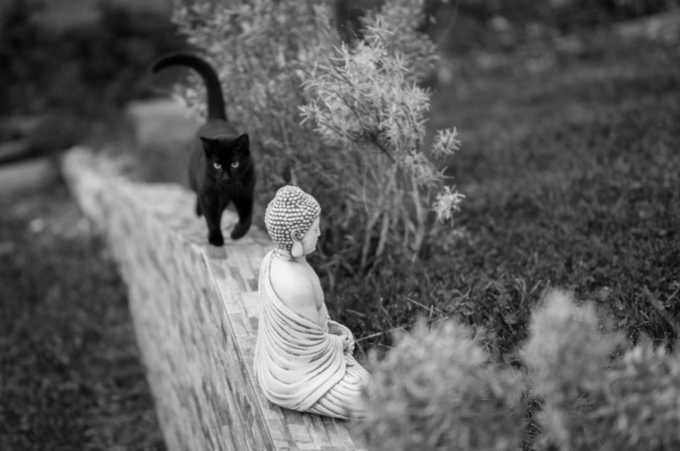 Black cat and a Buda image in the garden
